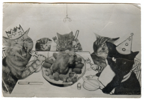 party-cats-11